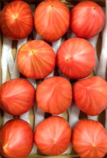 ファーストトマト.JPG