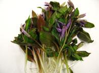 春の山菜画像